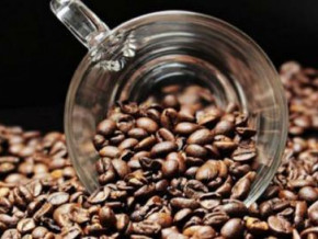 cameroon-exported-35-215-tons-of-coffee-during-the-2018-2019-season-up-39-1-season-over-season