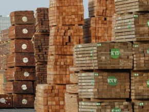 sawn-timber-cameroon-becomes-the-eu-s-leading-supplier-in-jan-sep-2019
