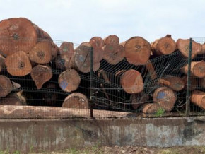 cameroon-vietnamese-wood-exporters-hid-over-xaf170-bln-of-export-revenues-from-the-state-in-2014-2017-report-claims
