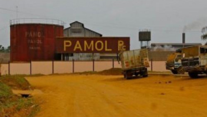 palm-oil-sector-the-south-west-region-s-crisis-affects-cdc-and-pamol-s-production
