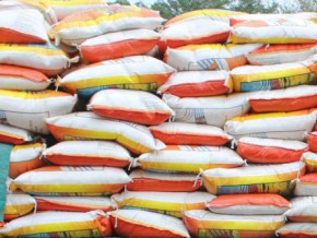 cameroon-authorizes-the-duty-free-importation-of-200-000-tons-of-rice-to-build-up-reserves