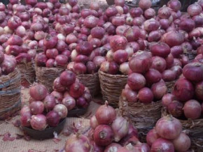 cameroon-plans-to-raise-onion-production-to-200k-tons-this-year-through-ifad-funded-program-padfa
