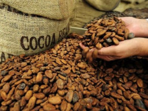 cameroon-export-revenues-fell-by-16-8-in-h1-2018-crippled-by-cocoa-coffee-sector