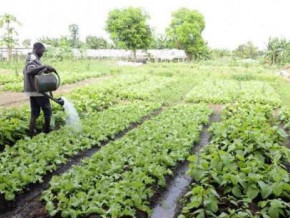 afdb-and-ilo-support-agricultural-projects-to-stem-rural-exodus-of-young-people-in-central-africa