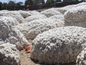 cemac-higher-cotton-output-dropped-export-prices-by-7-7-in-q4-2018