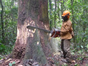 cameroon-eu-estimates-national-tree-cover-losses-to-be-3-times-the-size-of-yaounde-yearly