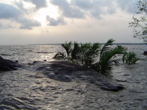 plastic-waste-destroys-mangroves-of-the-wouri-estuary