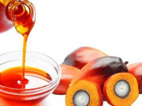 cameroon-safacam-s-palm-oil-sales-rose-yoy-in-h1-2020-because-of-the-coronavirus-pandemic