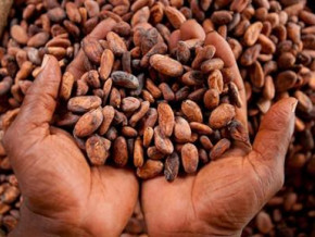cameroon-to-pay-about-cfa1-billion-cocoa-premium-to-quality-cocoa-producers-this-year