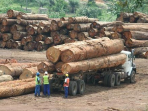 cameroon-launches-an-awareness-campaign-to-promote-the-use-of-legal-wood