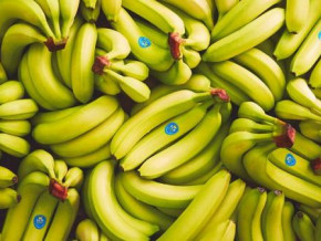 cameroon-banana-exports-close-to-25-down-yoy-in-jan-sep-2019