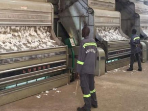 cameroon-s-coton-production-up-8-36-yoy-to-328-448-tons-in-the-2019-2020-season