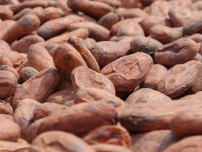 cameroon-short-rainy-season-s-onset-induces-a-slight-drop-in-cocoa-prices