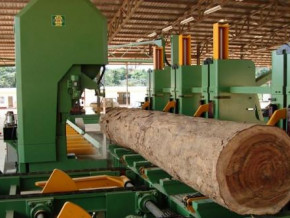 italian-sif-inter-plans-to-invest-xaf2-5-bln-to-build-a-wood-processing-unit-in-cameroon