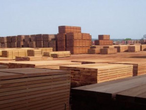 high-taxes-affect-the-cameroonian-wood-on-chinese-markets