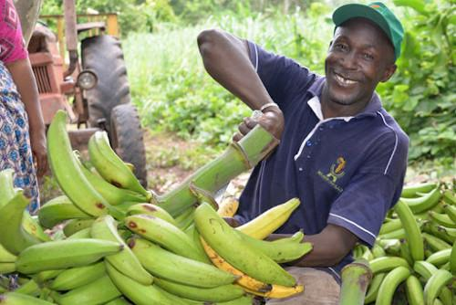 kribi-to-soon-host-two-plantain-production-and-fish-farming-clusters