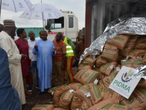 cameroon-pidma-to-distribute-1000-tons-of-hybrid-corn-seeds-to-improve-production-in-2018