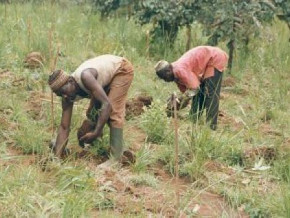 cameroon-distributes-2000-bags-of-farm-inputs-and-weedicides-in-the-northwest