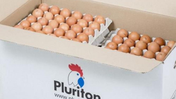 cameroon-temporarily-bans-the-importation-of-day-old-chicks-and-hatching-eggs-to-guard-national-territory-against-avian-influenza