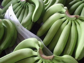 cameroon-s-banana-exports-affected-by-cdc-s-counter-performance