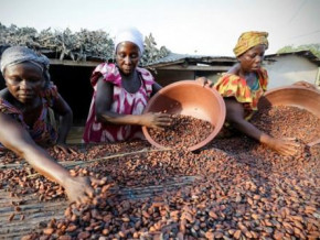 cameroon-cicc-launches-program-to-boost-rural-women-s-revenues-through-cocoa-farming