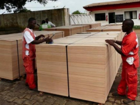 the-drop-in-cameroon-s-plywood-exports-to-the-usa-reached-a-peak-of-88-in-aug-2019