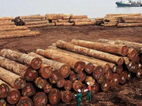 cameroon-log-exports-to-the-eu-fell-33-yoy-in-q1-2019