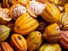 cameroon-cocoa-production-rose-during-the-2017-2018-campaign-despite-unrest-in-the-southwest