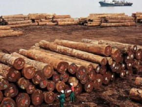 wood-cameroonian-exporters-generated-xaf52-5-bln-from-their-exports-to-china-in-h1-2019