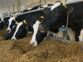 animal-feed-sodecoton-forced-to-source-new-export-markets-due-to-drop-in-demand-from-nigeria