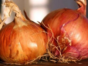 cameroon-padfa-provides-improved-onion-seeds-that-significantly-increase-production