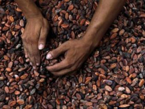 cameroon-three-traders-alone-accounted-for-56-of-cocoa-exports-in-2017-18