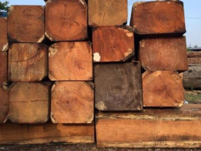 cameroon-sawn-wood-exports-to-europe-fell-by-8-in-h1-2018