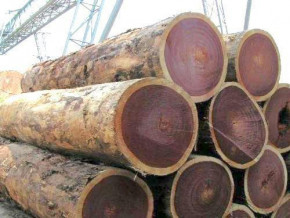 cameroon-exported-more-than-1-million-m3-of-woods-in-2017