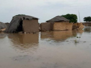 cameroon-floods-and-elephants-destroy-over-11-000-tons-of-cereals-in-the-mayo-danay