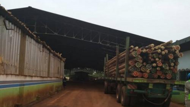 cameroon-due-to-security-reasons-eneo-is-unable-to-access-forests-in-the-northwest-to-replace-wooden-poles