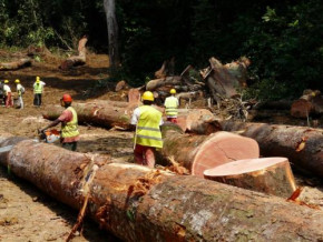 cameroon-among-countries-performing-poorly-in-managing-natural-resources