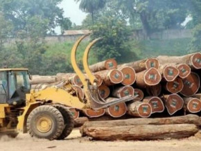 cameroon-local-timber-growers-to-take-part-in-the-wood-fair-in-gabon-on-june-24-26-2019