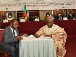 cameroon-sets-up-a-policy-framework-to-promote-the-production-of-sustainable-and-zero-deforestation-cocoa