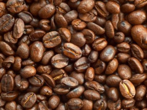 synergie-nord-sud-enters-the-international-market-with-4-645-tons-of-coffee-ordered-by-us-and-senegalese-companies