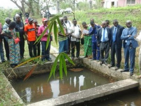 cameroon-300-000-fingerlings-to-be-distributed-to-fish-farmers-in-2020-to-boost-production