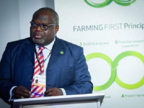 international-expert-hope-sona-ebai-becomes-a-member-of-the-executive-board-of-agribusiness-group-cdc