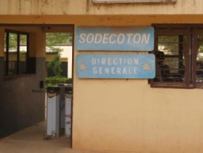 cameroon-sodecoton-reports-record-cotton-production-of-309-000-tons-in-2018-19