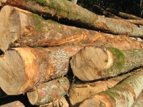 cameroonian-hardwood-exports-to-the-u-s-fell-20-y-y-in-2018