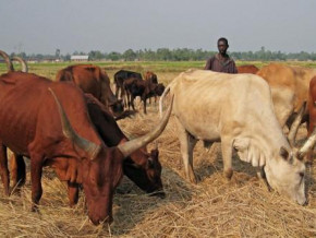 cameroon-6th-edition-of-livestock-fair-to-be-held-on-nov-8-10-in-ngaoundere
