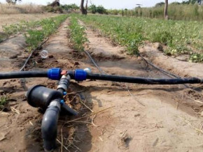 cameroon-world-bank-grants-xaf110-bln-loan-to-boost-agricultural-output-in-benue-valley