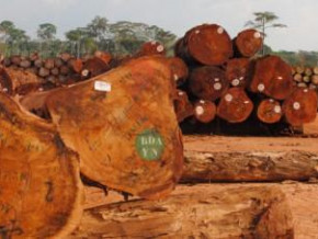 cameroon-remained-the-third-exporter-of-sawn-wood-to-canada-in-april-2018