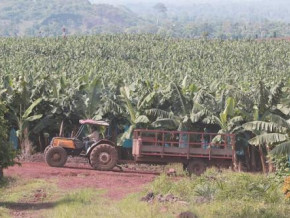 plantations-du-haut-penja-seeks-agricultural-tractor-supplier-for-its-operations-in-cameroon