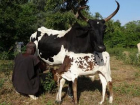 etienne-valere-olougou-plans-to-invest-xaf9-bln-in-the-production-of-dairy-products-and-biogas-in-adamaoua
