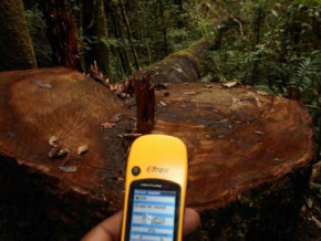cameroon-generated-xaf72-5-mln-of-forest-revenue-surplus-in-2016-2019-thanks-to-reports-through-the-certified-snoie-scheme